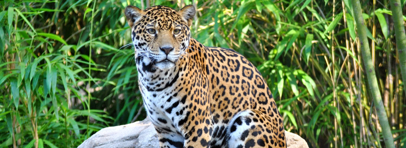 Land of the Jaguar
